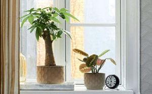 4 nemme planter til dig, som ikke er god til planter