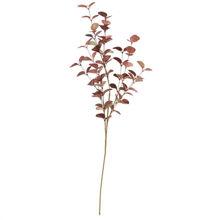Billede af Bungalow Eucalyptus H: 80 cm - Rosy